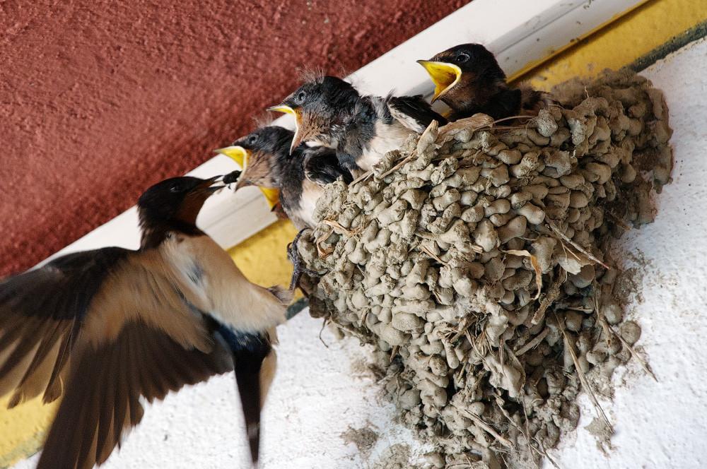 Как вить гнездо