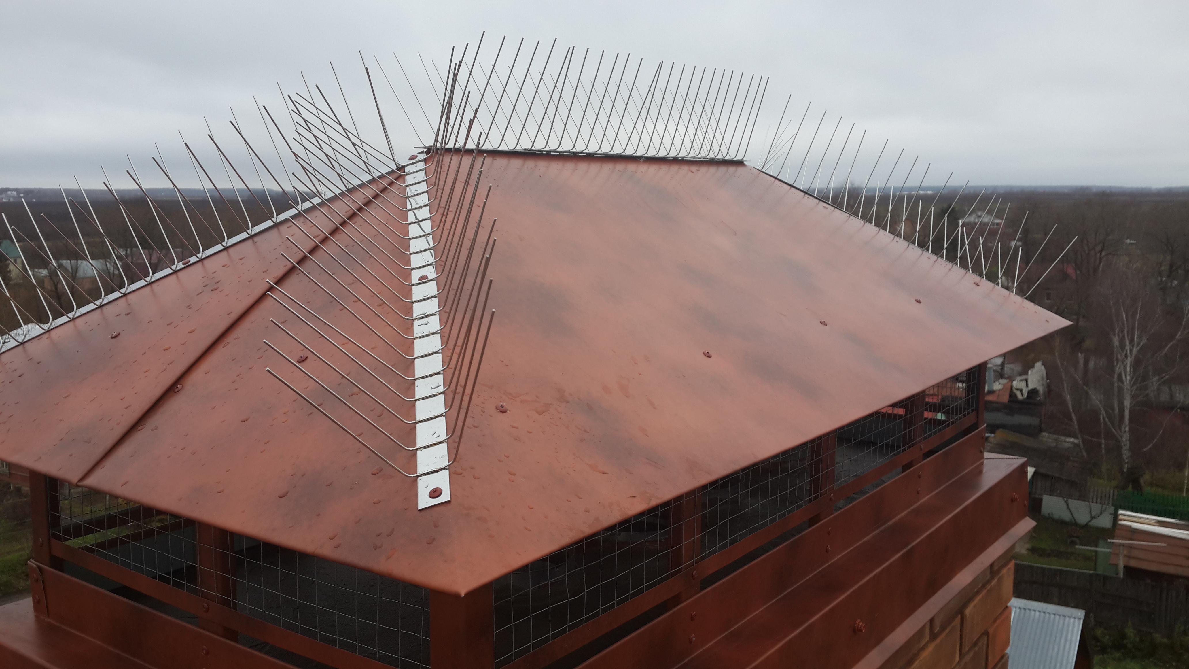 Как выгнать птиц из-под крыши: вред от пернатых, способы бор.